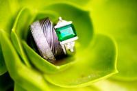 Unique, Modern Rings in Succulent